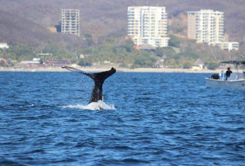 Trip Achiever Kris Buege Whale Watching!